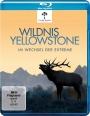 Wildnis Yellowstone - Im Wechsel der Extreme (Blu-ray)